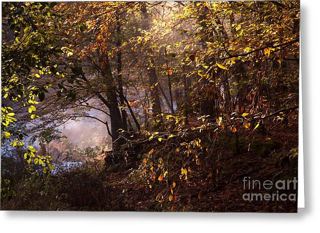 Mystical Landscape Greeting Cards - Misty Morning at the Fork River Greeting Card by Iris Greenwell