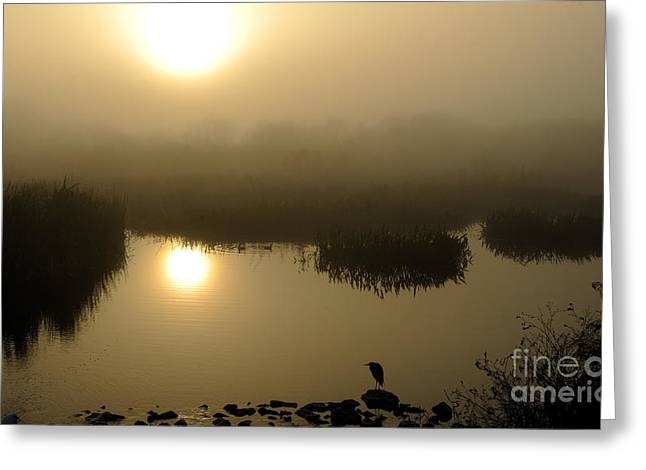 Circle B Bar Greeting Cards - Misty Morning in the Marsh Greeting Card by Nancy Greenland