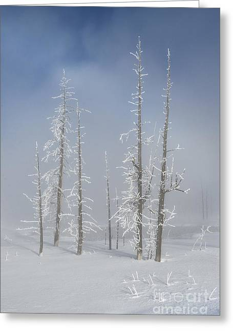 Snow-covered Landscape Greeting Cards - Misty Morning In Yellowstone National Park Greeting Card by Sandra Bronstein