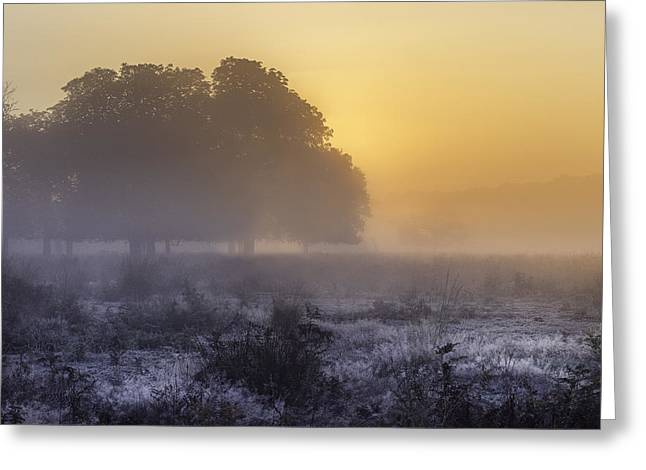 Emergence Greeting Cards - Misty morning Greeting Card by Inguna Plume