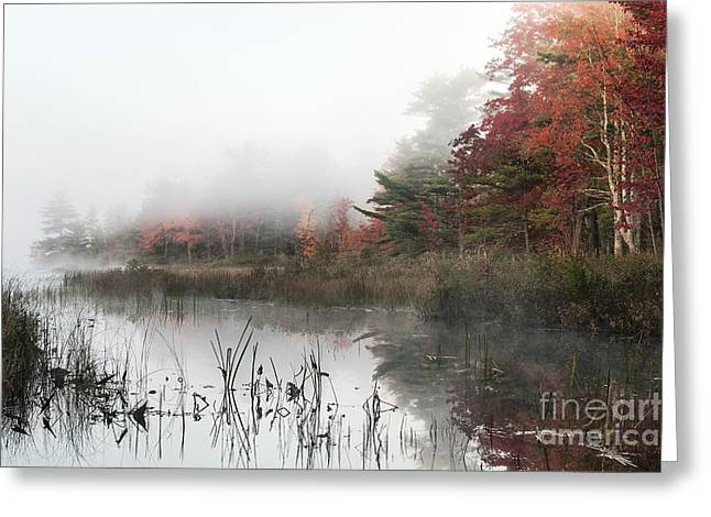 Somesville Maine Greeting Cards - Misty Morning Greeting Card by John Greim