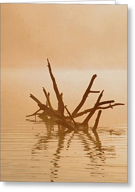 Boundary Waters Pyrography Greeting Cards - Misty Morning Greeting Card by Lori Douthat