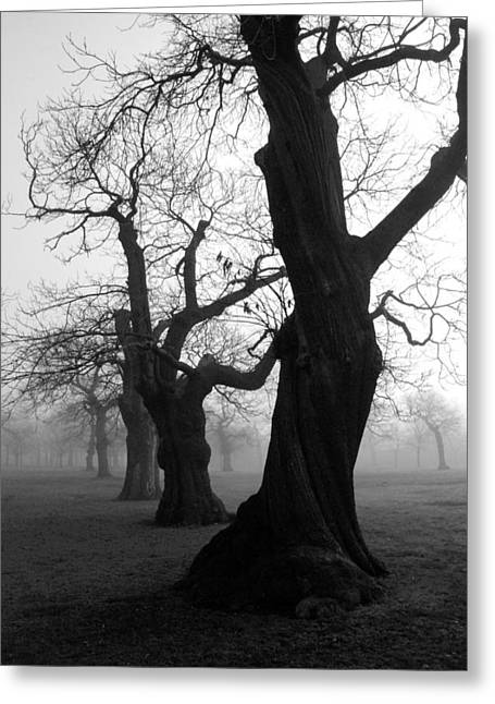 Tress Greeting Cards - Misty Morning Greeting Card by Mark Rogan