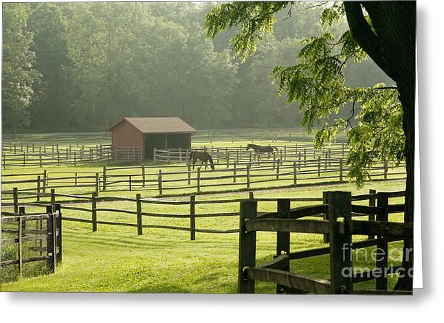 Split Rail Fence Greeting Cards - Misty Morning Maze Greeting Card by Carol Lynn Coronios