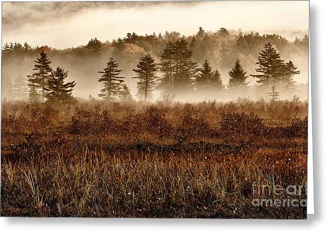 Abstract Blueberries Greeting Cards - Misty Morning Meadow II - Cranberry Wilderness Greeting Card by Dan Carmichael