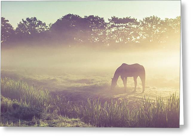 The Trees Greeting Cards - Misty Morning on the Dutch Field Greeting Card by Jenny Rainbow