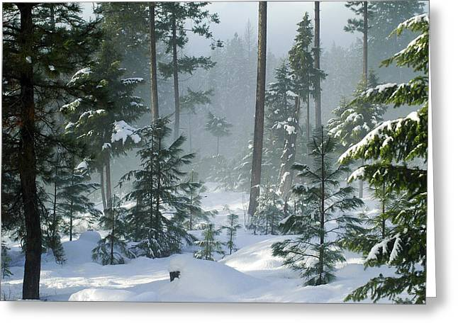 Annie Pflueger Greeting Cards - Misty Morning Snow Greeting Card by Annie Pflueger