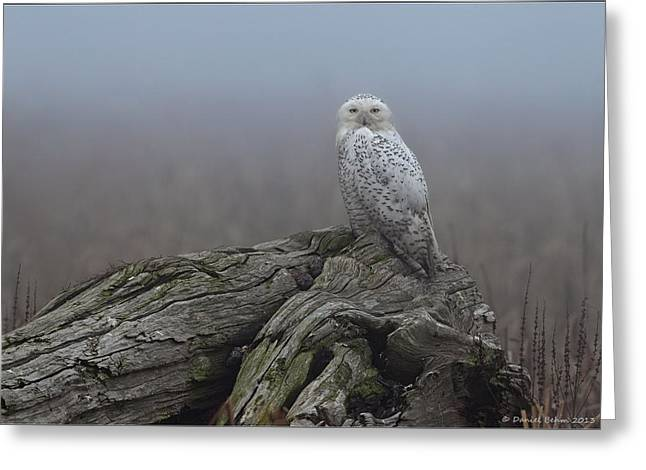 Misty. Pyrography Greeting Cards - Misty Morning Snowy Owl Greeting Card by Daniel Behm