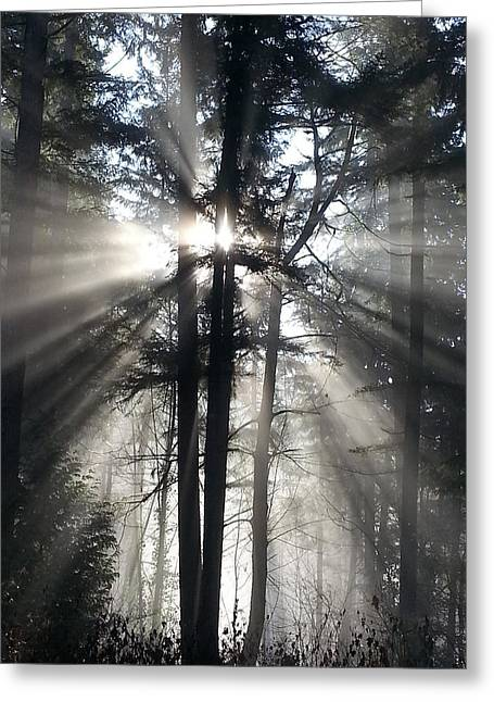 Fir Tree Greeting Cards - Misty Morning Sunrise Greeting Card by Crista Forest