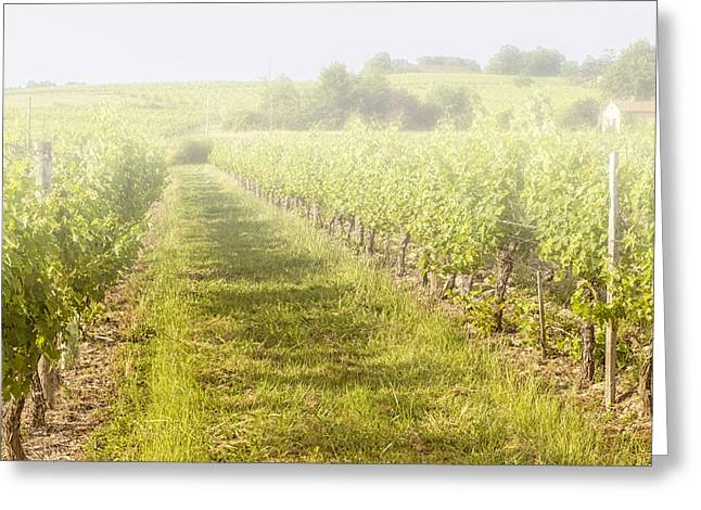 Cultivation Greeting Cards - Misty Morning Vineyard Greeting Card by Nomad Art And  Design