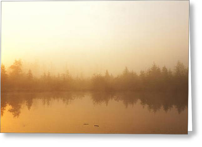 Envelop Greeting Cards - Misty Morning, Volvo Bog, Illinois, Usa Greeting Card by Panoramic Images