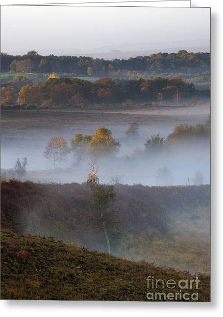 Forestry Commission Greeting Cards - Misty Morning Greeting Card by Wendy Wilton