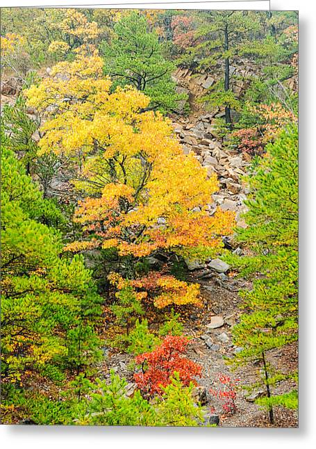 Rainbow Trout Greeting Cards - Misty Mountain Tree - Talimena Scenic Byway - Arkansas to Oklahoma Greeting Card by Silvio Ligutti