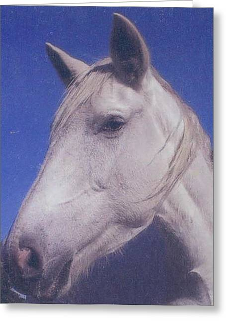 Pat Mchale Greeting Cards - Misty Greeting Card by Pat Mchale