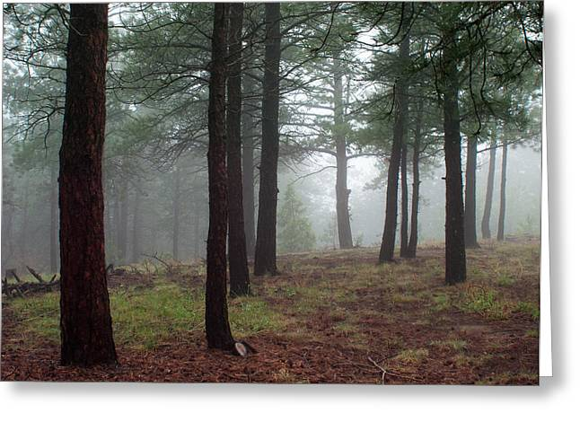 Julie Magers Soulen Greeting Cards - Misty Pines Landscape in Colorado Greeting Card by Julie Magers Soulen