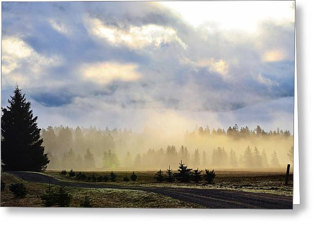 Annie Pflueger Greeting Cards - Misty Spring Morning Greeting Card by Annie Pflueger