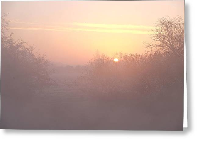 Mark Severn Greeting Cards - Misty Sunrise Greeting Card by Mark Severn