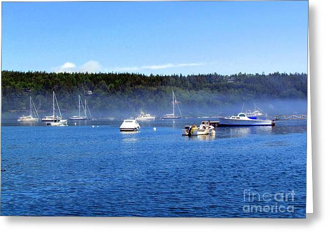 Somes Sound Greeting Cards - Misty Sunshine Greeting Card by Elizabeth Dow