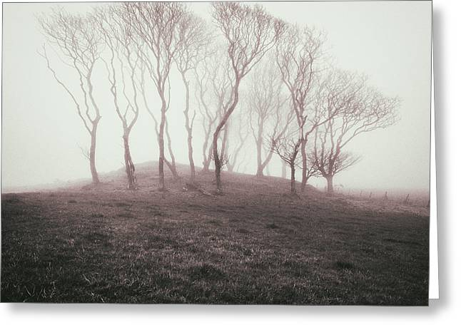 Minimal Minimalistic Greeting Cards - Misty Trees Greeting Card by Dave Bowman