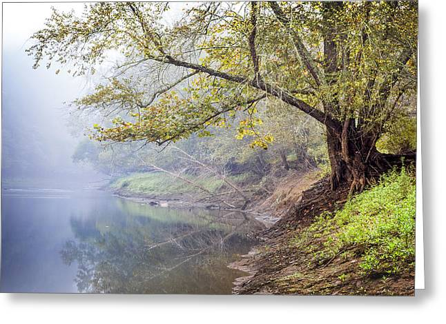 Autumn Leaf On Water Greeting Cards - Misty Trees Greeting Card by Debra and Dave Vanderlaan