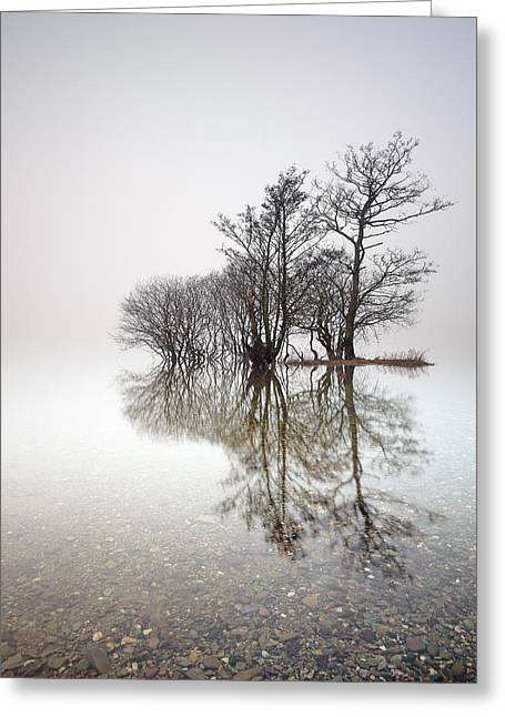 Reflection Of Trees In Water Greeting Cards - Misty Trees Greeting Card by Grant Glendinning