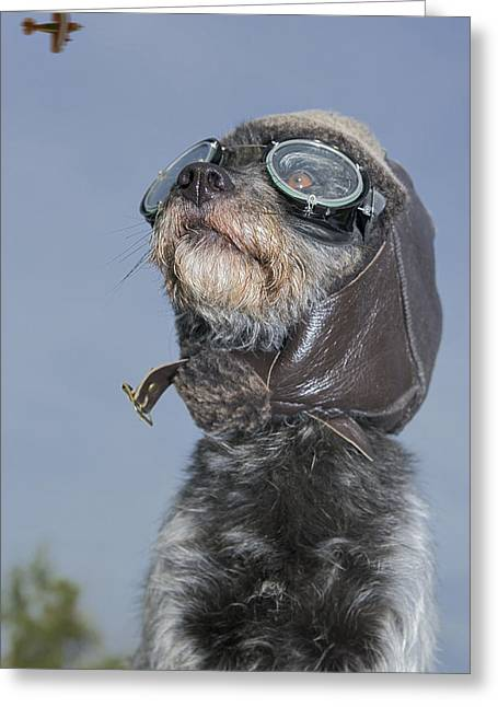 Descriptors Greeting Cards - Mixed Breed Dog Dressed In Leather Cap Greeting Card by Darwin Wiggett
