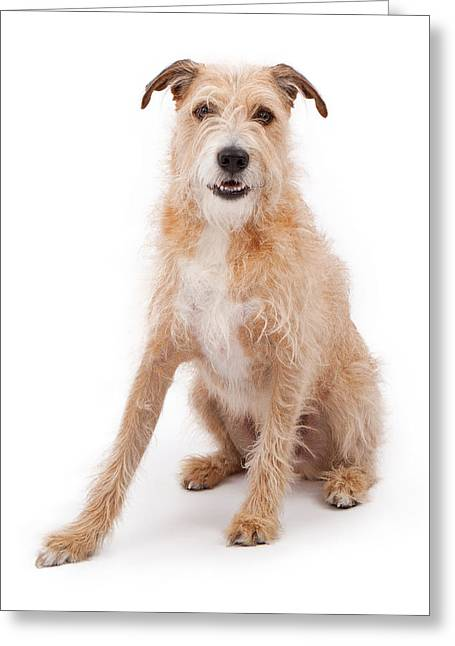 Scruffy Greeting Cards - Mixed Breed Large Scruffy Dog Greeting Card by Susan  Schmitz