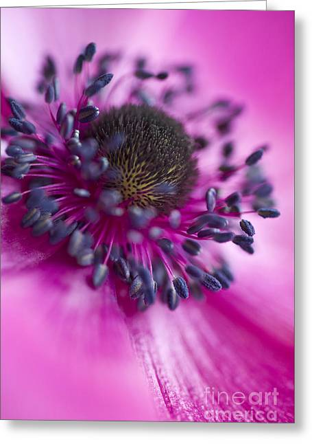 Mixed Emotions Greeting Card by Jan Bickerton