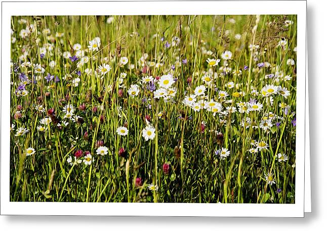 Flower Bed Greeting Cards - Mixed Flowers Greeting Card by Aged Pixel