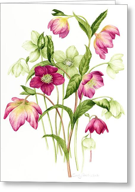 Florist Greeting Cards - Mixed hellebores Greeting Card by Sally Crosthwaite