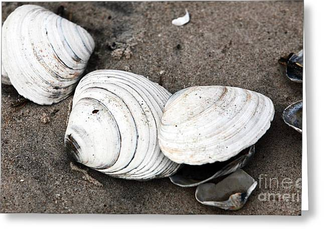 Seashell Picture Photographs Greeting Cards - Mixed Shells Greeting Card by John Rizzuto
