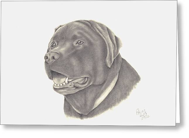 Chocolate Lab Greeting Cards - Mocha Greeting Card by Patricia Hiltz