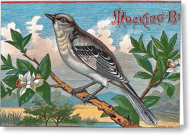 Mocking Bird Greeting Card by Studio Artist