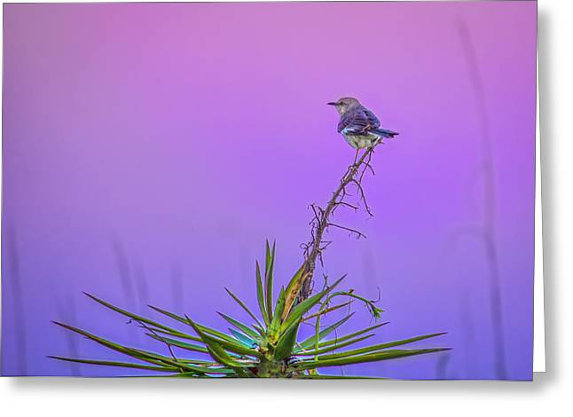 Bayonet Greeting Cards - Mocking The Yucca Greeting Card by Rob Sellers