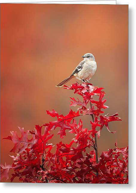 Mockingbird Autumn Greeting Card by Bill Wakeley