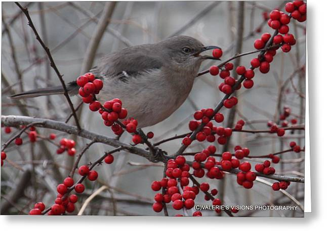 Stein Greeting Cards - Mockingbird in Berry Tree Greeting Card by Valerie Stein