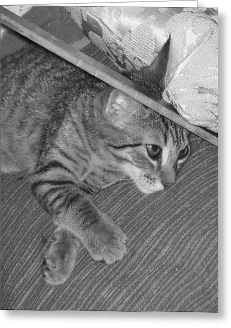 Kitten Prints Greeting Cards - Model Kitten Greeting Card by Pharris Art