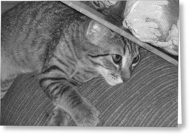 Photos Of Kittens Greeting Cards - Model Kitten Greeting Card by Pharris Art