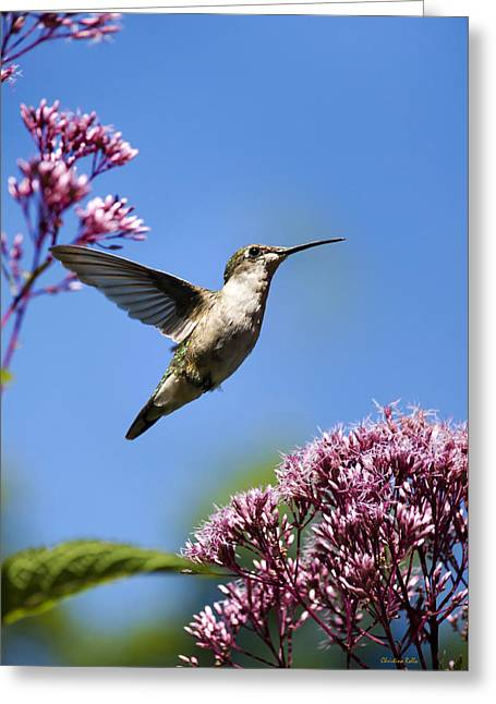 Hovering Greeting Cards - Modern Beauty Greeting Card by Christina Rollo
