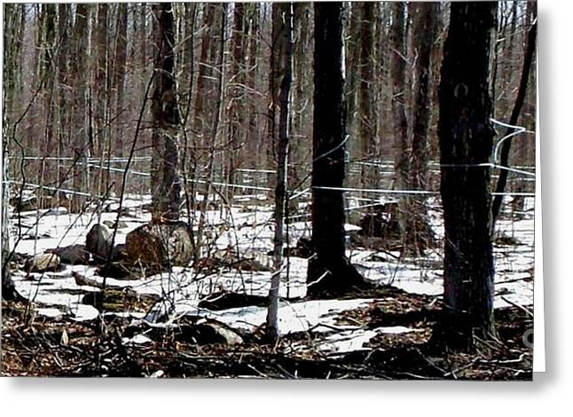 Purchase Greeting Cards - Modern Maple Tree Sap Tapping Greeting Card by Gail Matthews