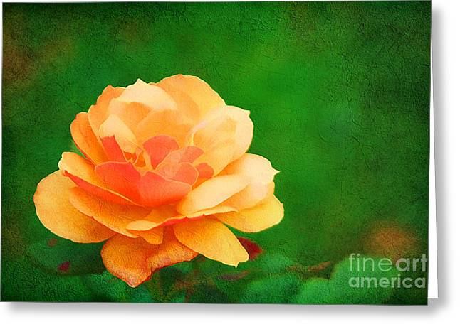 Peachy Greeting Cards - Modest Greeting Card by Darren Fisher
