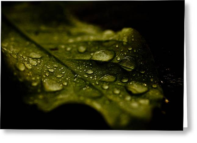Moist Greeting Cards - Moist Leaf Greeting Card by Shane Holsclaw