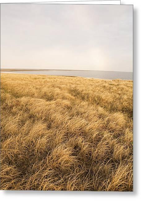 Moist Greeting Cards - Moist Sedge Meadow Along Coastal Greeting Card by Gary Schultz