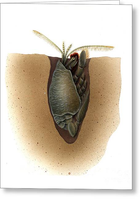 Sand Art Greeting Cards - Mole Crab Family Emerita Greeting Card by Carlyn Iverson