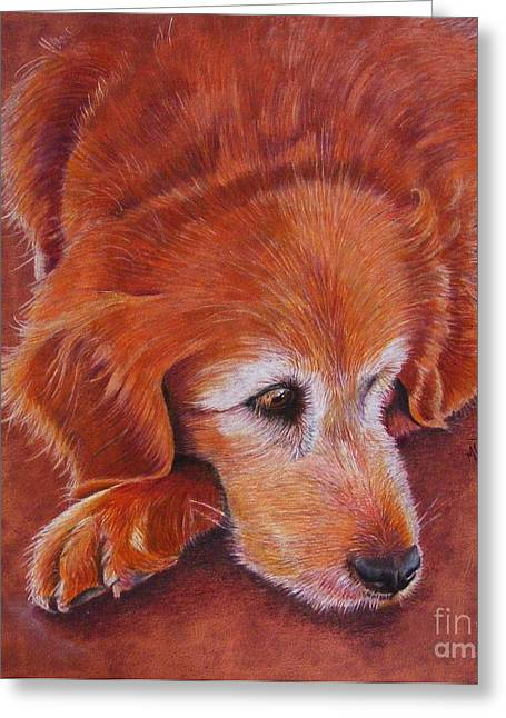 Golden Brown Drawings Greeting Cards - Mollie Greeting Card by Marilyn Smith