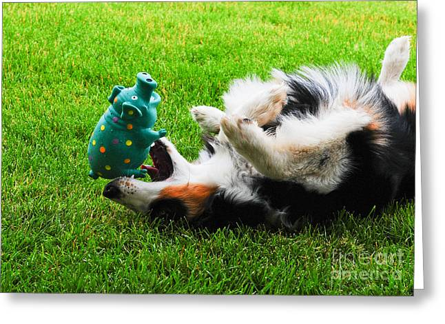 Dog At Play Greeting Cards - MOLLY MONTANA and  MISS PIGGY Greeting Card by Kinsey Barnard