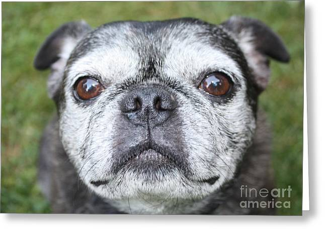 Eyebrow Greeting Cards - Mollys Mug Shot Greeting Card by John Telfer