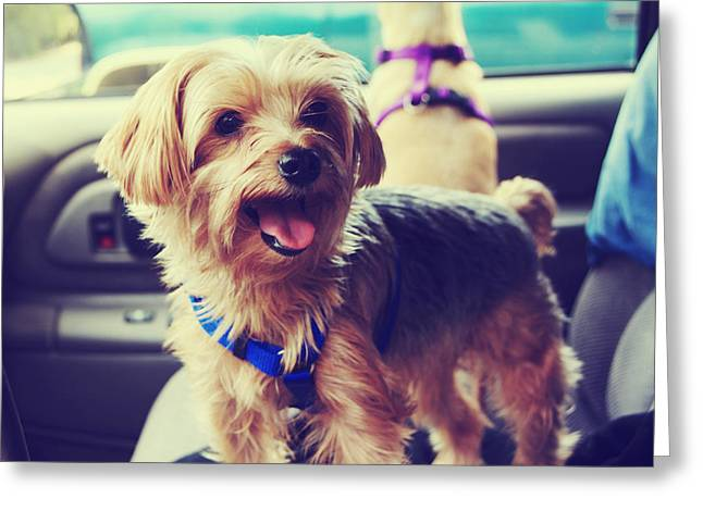 Panting Dog Greeting Cards - Mollys Road Trip Greeting Card by Laurie Search