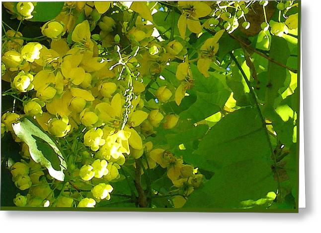 Golden Shower Greeting Cards - Molokai Shade Greeting Card by James Temple