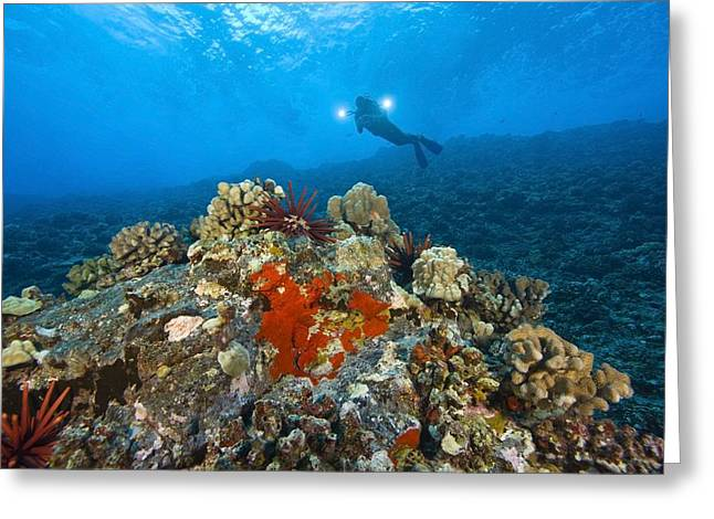 Only Mid Adult Women Greeting Cards - Molokini Crater Maui Hawaii Usa A Greeting Card by Stuart Westmorland